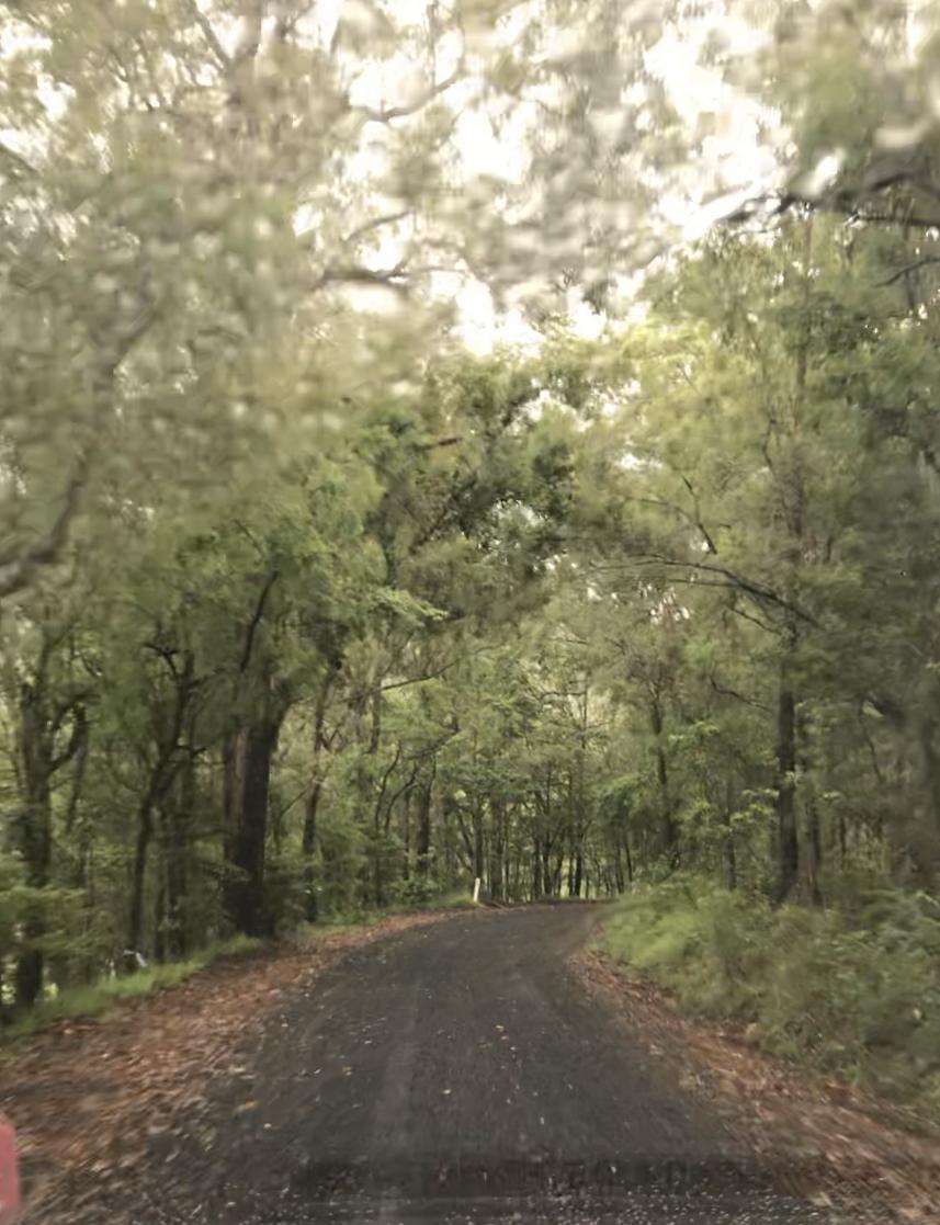 Un día en la Australia profunda y verde.