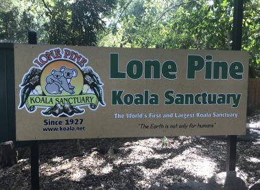 La Sunshine Coast y el Lone Pine Koala Sanctuary de Queensland.