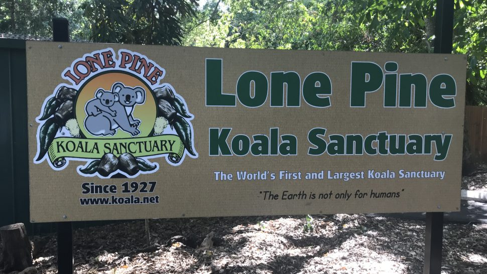 Queensland. The Sunshine Coast & the Lone Pine Koala Sanctuary.